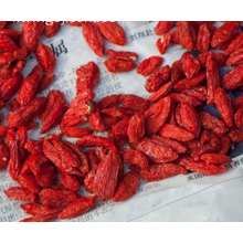 Top quality competitive price export Goji Berry