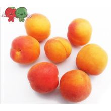 Best Quality Fresh Apricots