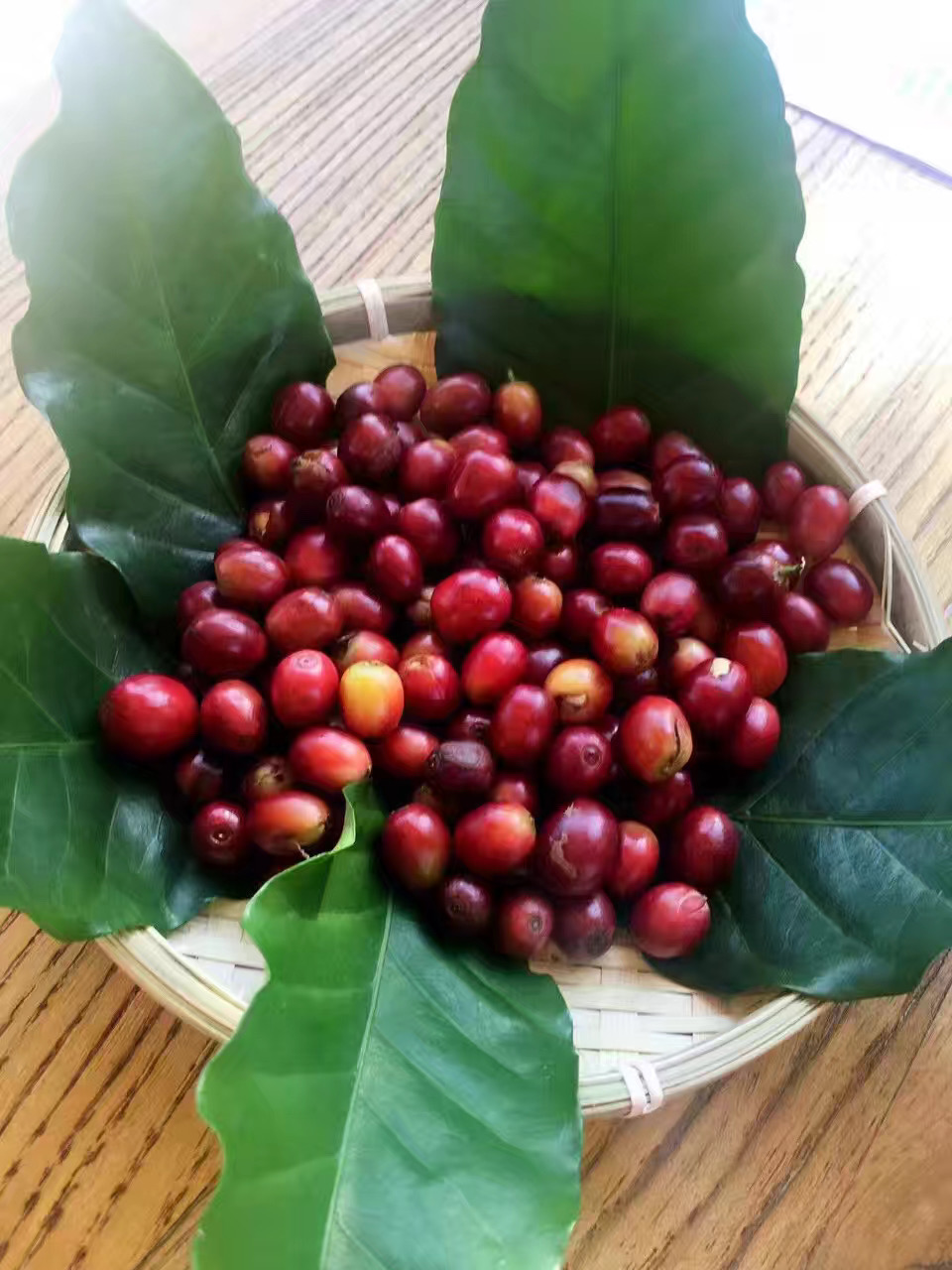 Finest Arabica Roasted Coffee Beans