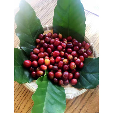 Organic  Arabica Coffee Beans
