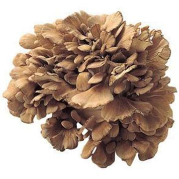 factory direct Sell Natural maitake mushroom extract
