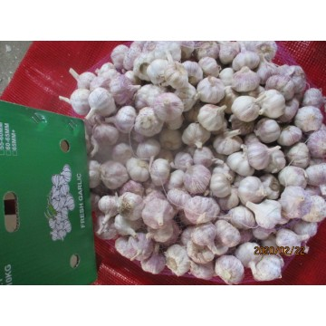 2019 Hot Sale Knoblauch