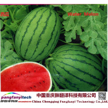Fresh Tasty Healthy Self-planted Sweet Water Melon
