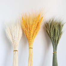 50 PCS Grain Wheat Ears Natural Dried Flowers Wheat Bedroom Living Room Decoration Bouquet Decoration Shooting Props