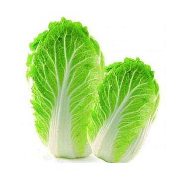 China cabbage for all kinds market