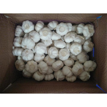 2019 Chinese Pure White Knoblauch aus Jinxiang