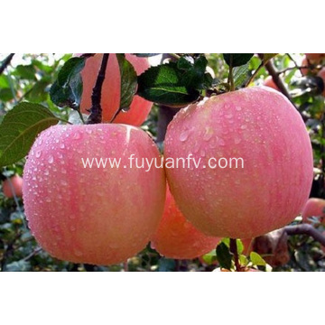 New Fresh Fuji apple with High Quality