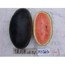 F1 hybrid black skin red watermelon seed