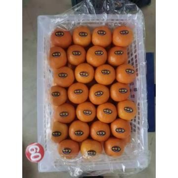Wogan Mandarin Export Fresh Sweet Mandarin