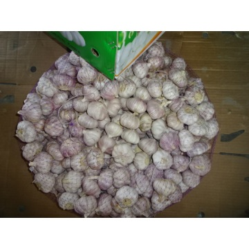 2019 Hot Sale Fresh Garlic