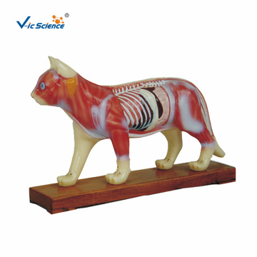 Cat Acupuncture Medical Science Model