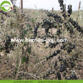 Factory Supply Fruit Healthy Black Goji Berry