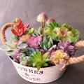 Home Garden Decoration Artificial Succulents Plants DIY Flower Arrangement Accessories Fake Plants Green Purple Red Mini Bonsai