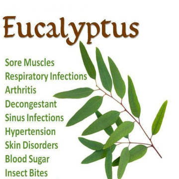 Natural Eucalyptus Oil 100% Pure Undiluted OEM ODM