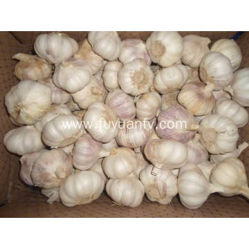 2018 new garlic to Brazil