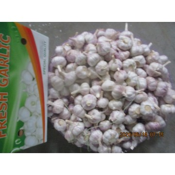 Buy High Quality Normal White Garlic