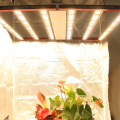 High yields led grow light for plant