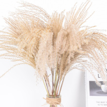 50pcs Real Dried Small Pampas Grass Wedding Flower Bunch Natural Plants Decor Home Decor Dried Flowers Phragmites