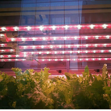 Full spectrum Red&blue grow Tube led grow light