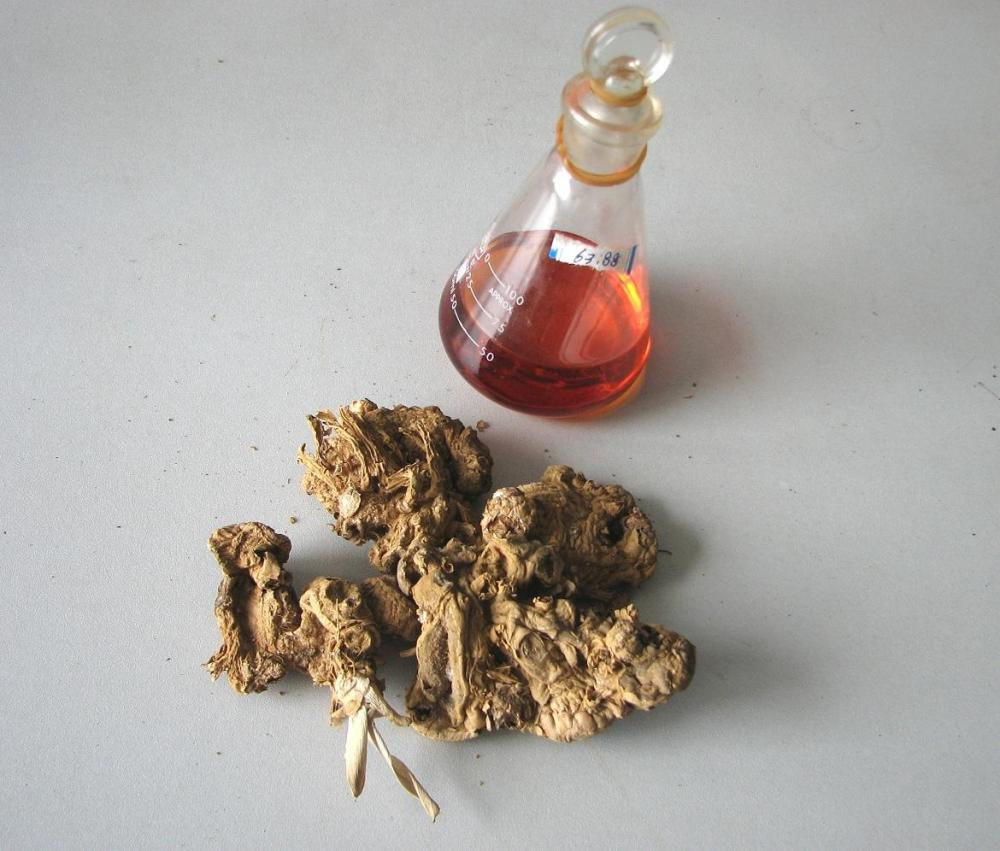 Ginger root essential oil for body massage