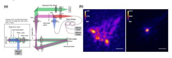 AO single molecule positioning microscope system and imaging comparison before and after AO correction