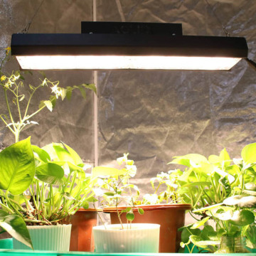 Full Spectrum LED Grow Light for Microgreens