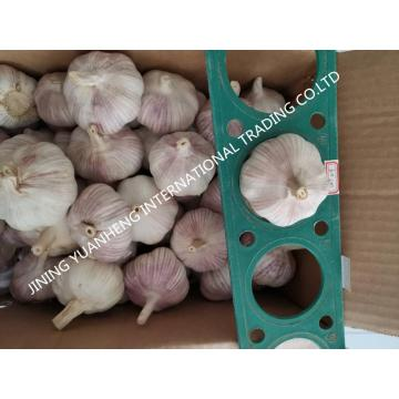 GARLIC IN EUROPEAN MARKET