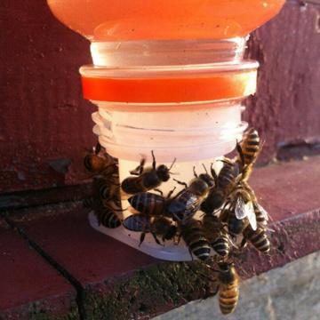 3pcs Bee Feeder Honey Entrance Feeder Drinking Fountain Equipment Plastic Beekeeping Equip Hive Gardening Tools Accessories