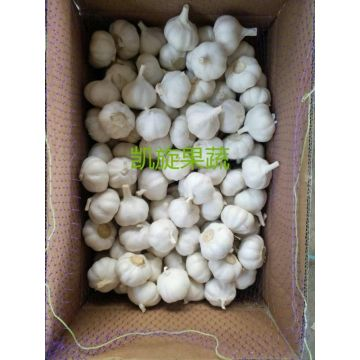 Export fresh garlic low price