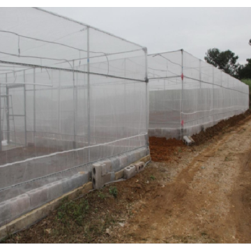 Agricultural Plastic Anti Aphid Insect Netting