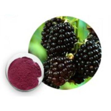 Best High Quality Blackberry Extract