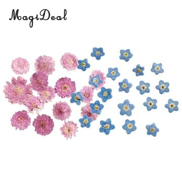 MagiDeal 20Pcs Pressed Dried Flower Dry Leaves For DIY Crafts Bookmark Cards Making