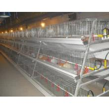 A Type Broiler Chicken Equipment