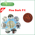 Natural extract Pine Bark Extract
