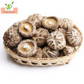 Healthy Organic Food dry Dried Shiitake Mushroom