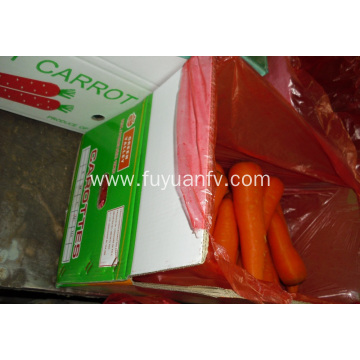 Good Quality Fresh Carrot And Delicious Carrot