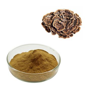 Natrual plant Turkey Tail Mushroom Extract
