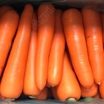 Red Carrots Wholesale WIth Best Quality