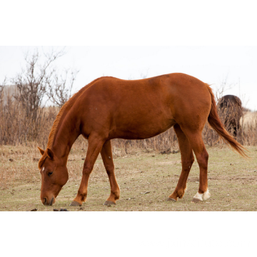 Pregnant Mare Urine Wholesale