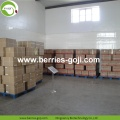 Fruit Products Buy Bulk Package Conventional Goji Berries