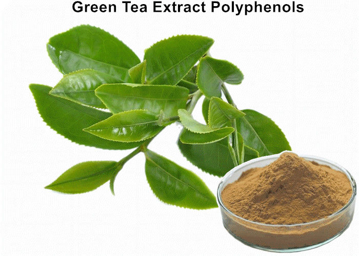 Pl17841103 Organic Green Tea Extract Weight Loss Bulk Supplements Green Tea Extract Anti Cancer