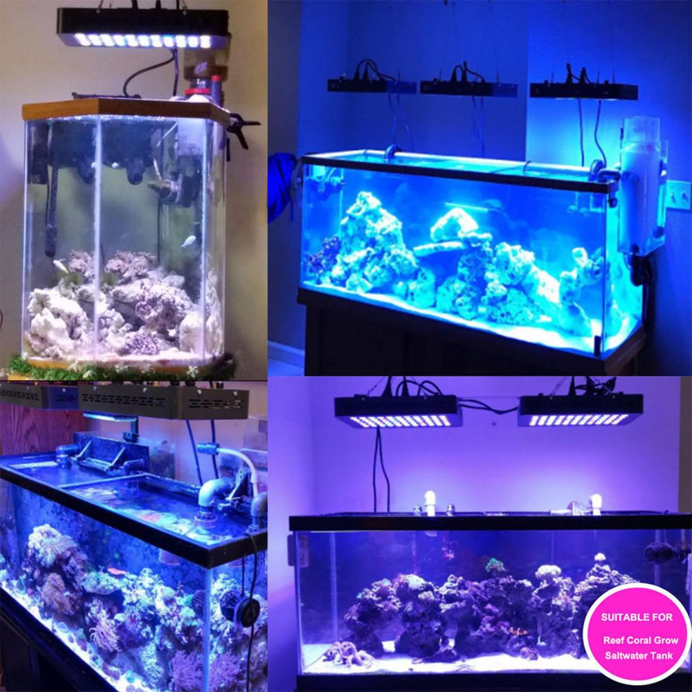 LED Aquarium Lighting for Saltwater