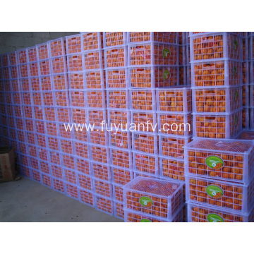 Export Standard Quality of Fresh Baby Mandarin