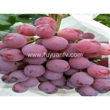 best xinjiang red global grapes
