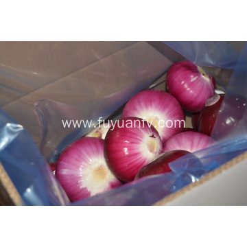 Peeled Red Onion to Australia market