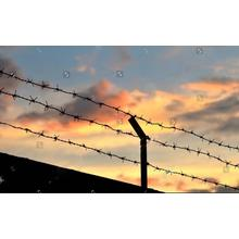 Free Samples Factory Direct Sales barbed wire