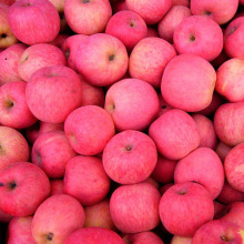 NingXia Fresh Bulk Red Fuji Apples Low Price