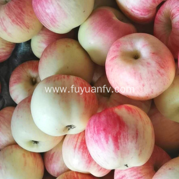 Shannxi Red Gala apples