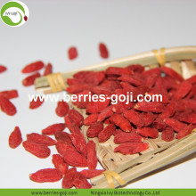 Factory Supply Fruits Nutrition New harvest Goji Berry
