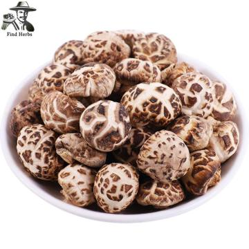 Lentinan Mushroom, Chinese Shiitake Mushroom, Xiang Gu, Hua Gu,